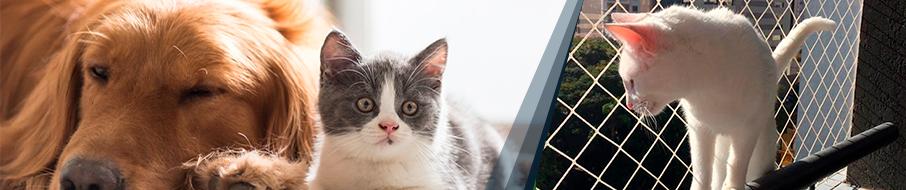 Telas de proteção para gatos em Curitiba